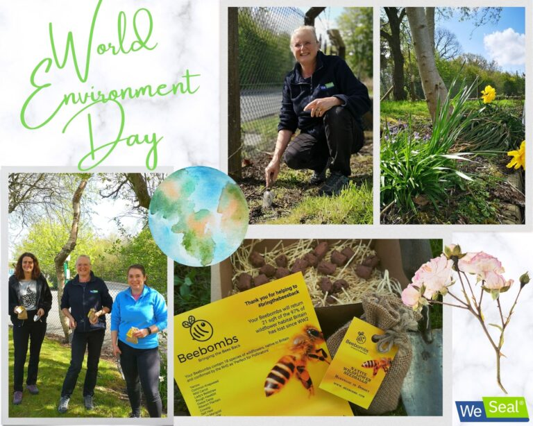A montage showing staff taking part in planting bee bombs for world environment day